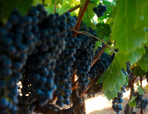 Best wine tasting in Napa Valley - our short review of wineries
