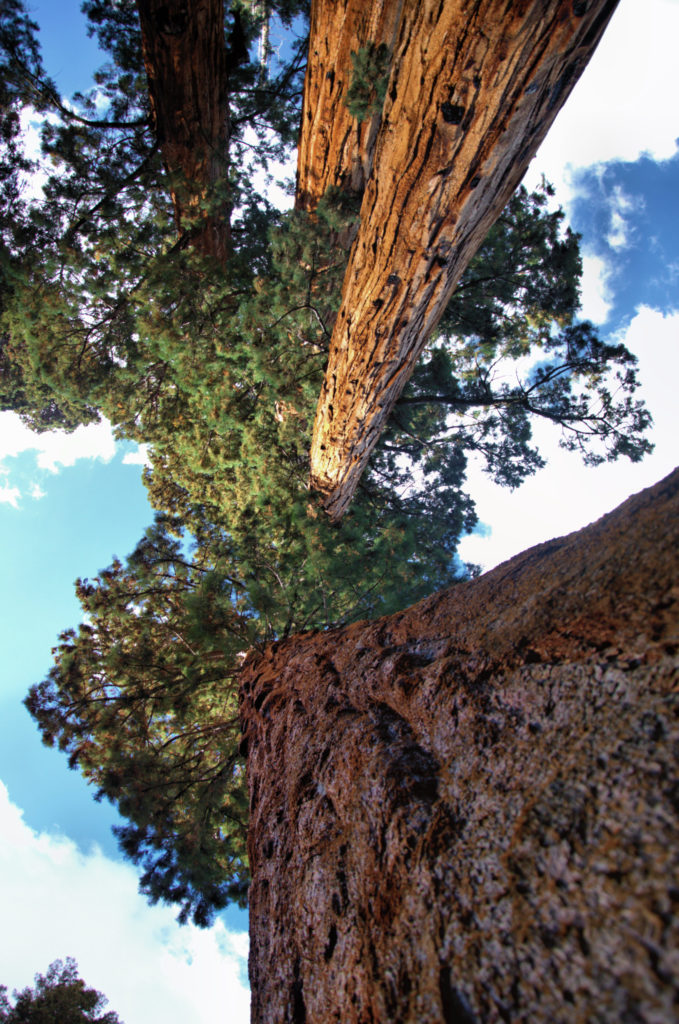 What makes sequoias in the park so special? Our guide will help you decide what to see in Sequoia National Park.