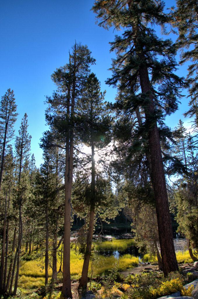 Fani wspinaczki górskiej jednym tchem wymienią ściany El Capitan, Half Dome, Mount Lyell... Park Yosemite - tych miejsc nie możecie ominąć.