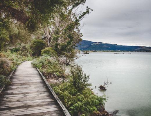 Co warto zobaczyć w Rotorua? Geotermalna stolica Nowej Zelandii
