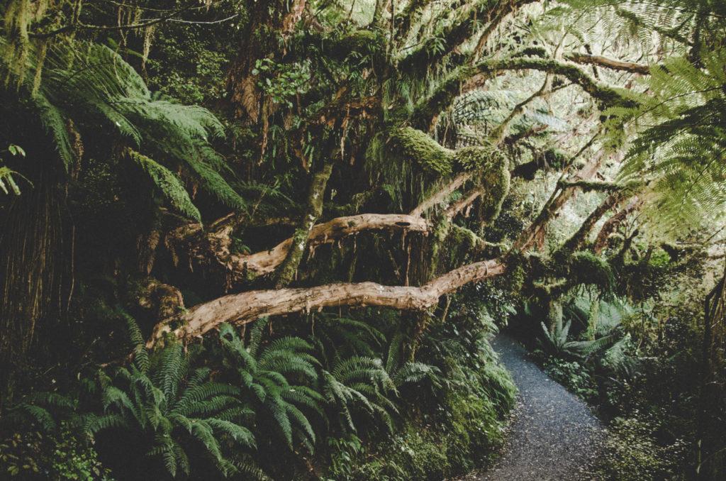 Co warto zobaczyć w Catlins? Największe atrakcje Catlins - najpiękniejsze miejsce w Nowej Zelandii naszym okiem.