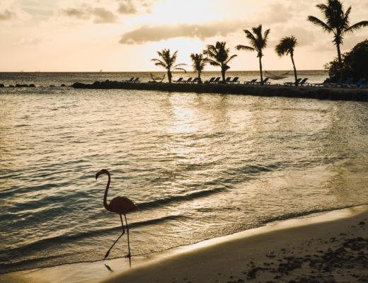 Zastanawiacie się, gdzie zobaczyć cudowne flamingi na Arubie? Kliknijcie i dowiedzcie się wszystkiego w naszym poście!